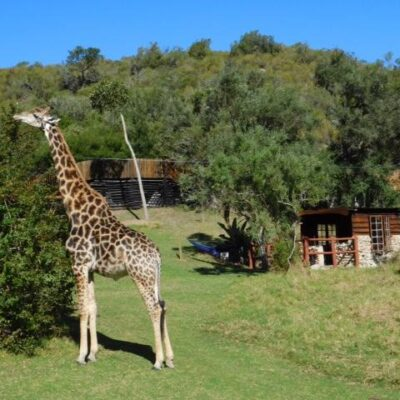 Giraffe View Safari Camp